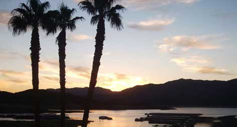 Photo of palm trees on the shoreline of Lake Mead