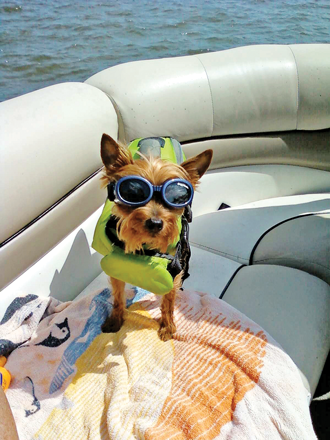 Dog in life jacket - BoatUS Magazine