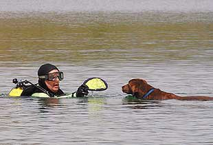 Nia the chocolate Lab and diver Mart Knapp