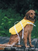 Golden retriver wearing a life jacket