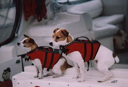 Scully and Skipper wearing their doggie life jackets.